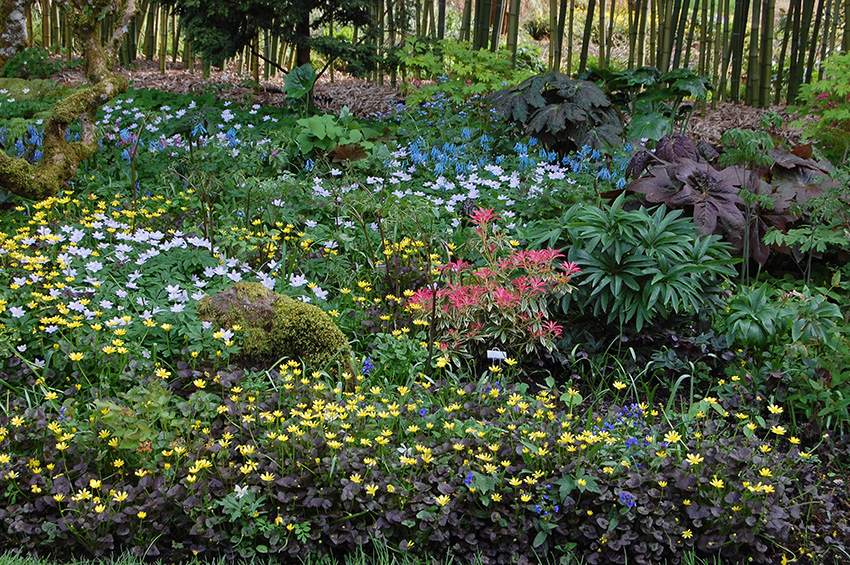 The Woodland Garden In Spring