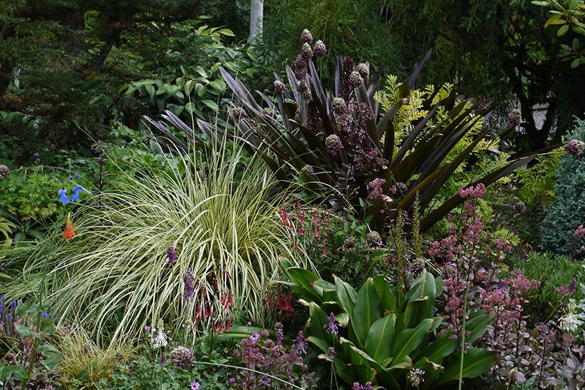 A Virtual Garden Tour At Northwest Garden Nursery Marietta And