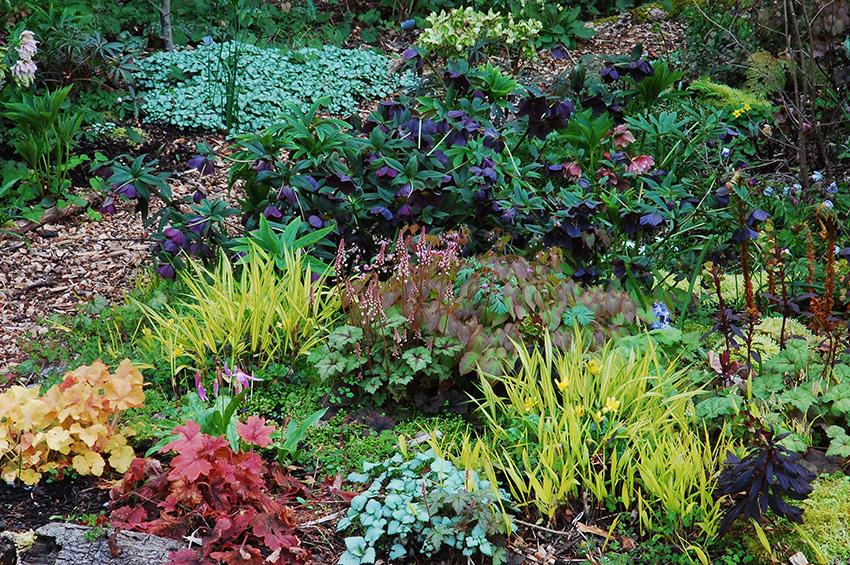 Virtual Garden Html Amazing Home Design 2019